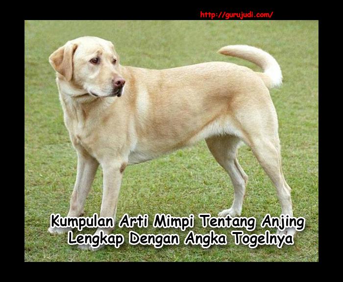 Image Result For Arti Mimpi Kiageng